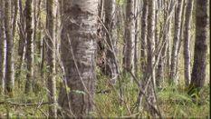 Canadian Elk Hunters
