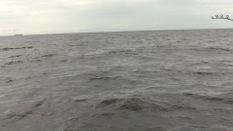 Trinidad and Tobago Tarpon