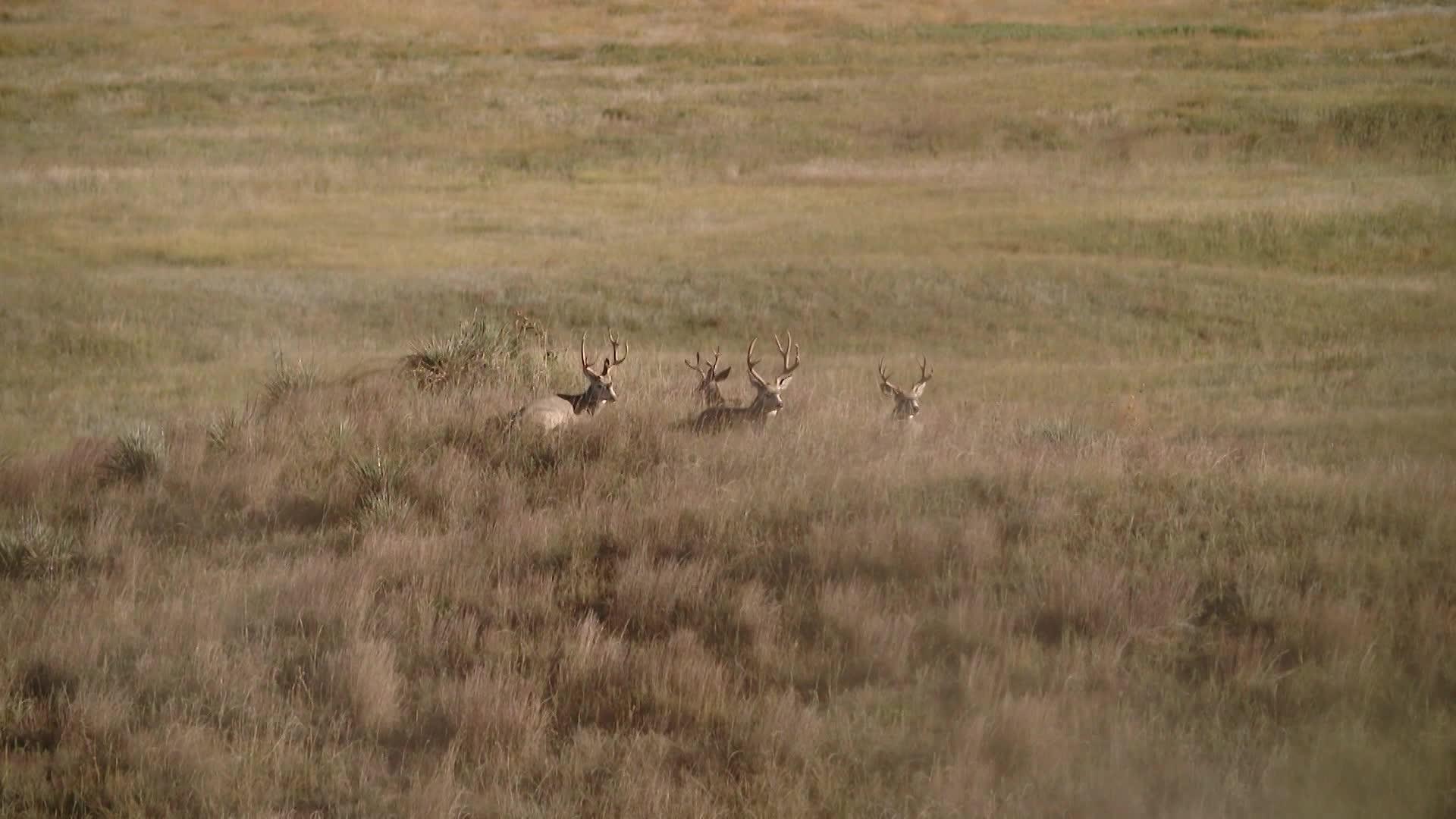 Year of the Mule Deer Part 2