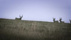 High Country Muleys