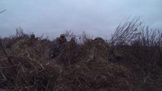 SEMO December Waterfowl