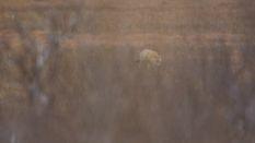 Alaska Deer Part 1