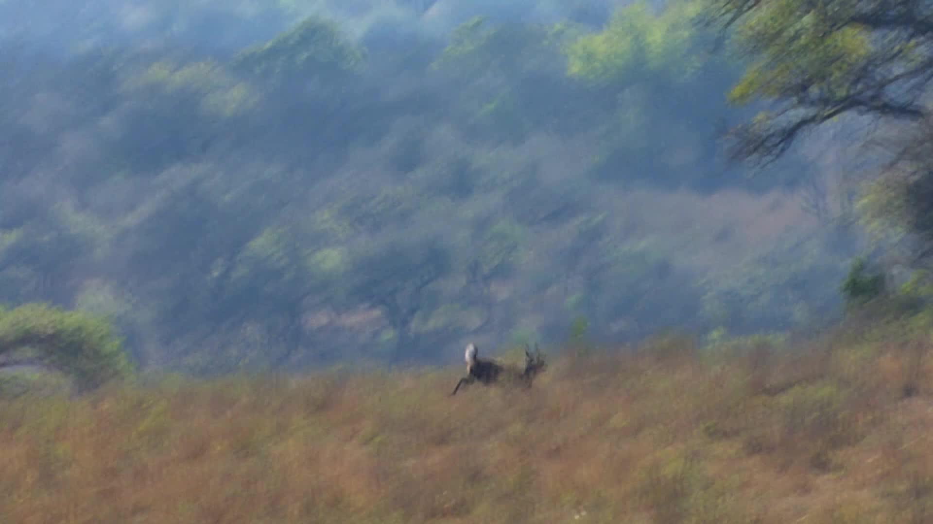 Africa: Spiral Horned Antelope
