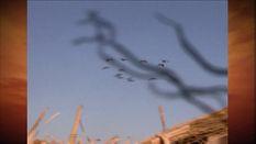 200th Episode Spectacular - American Birdhunter