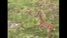 Deer Stalking and Game Shooting