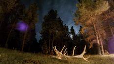 Arizona Elk 2