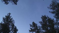 Crow Shooting with Owl Decoy