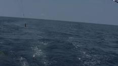 Crocodile Bay Blue Marlin