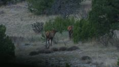 Setting the Stage for a High Plains Elk Hunt