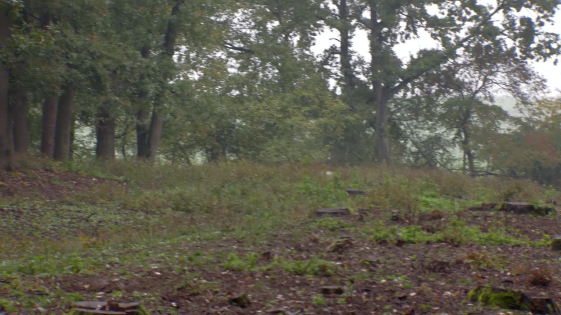 Wild Boar Fever 8 - Hunters Video