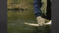 From the Archives: Steelhead Trout