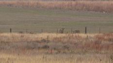 Realtree's Monster Bucks - Hunting Kansas
