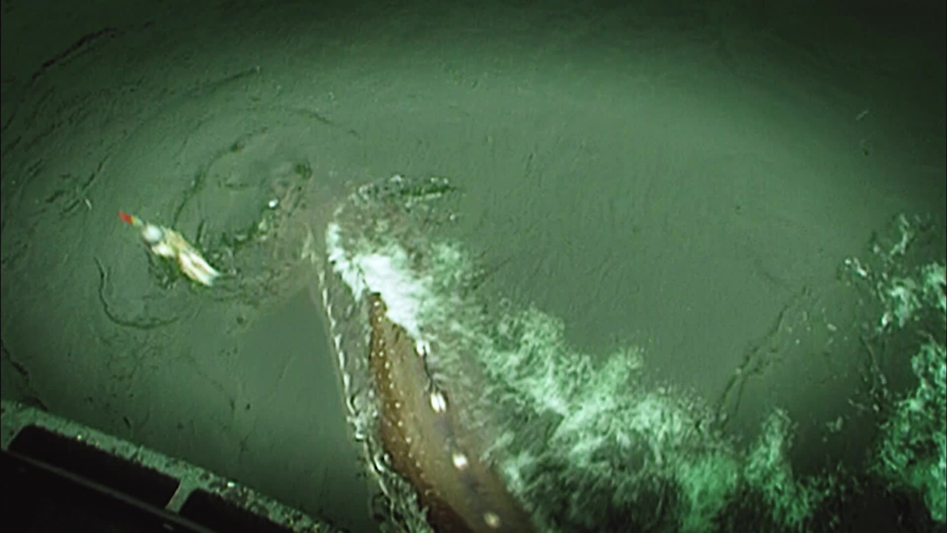 Fisheries to Treasure Times Three