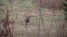 Buckmasters Classic / Life Hunt