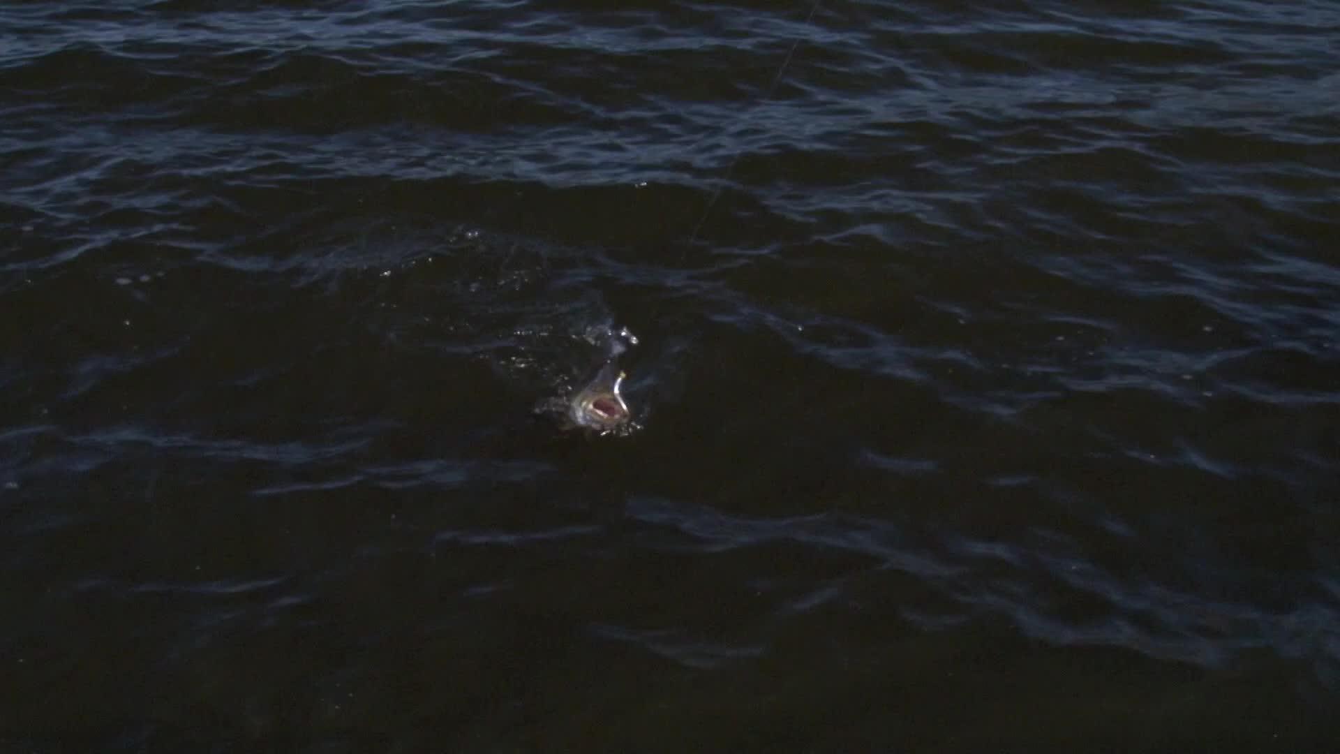 Swim Shiner Swim