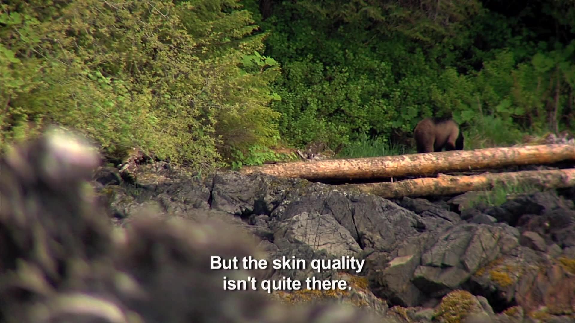 Bear by Boat - SWAROVSKI OPTIK Quests
