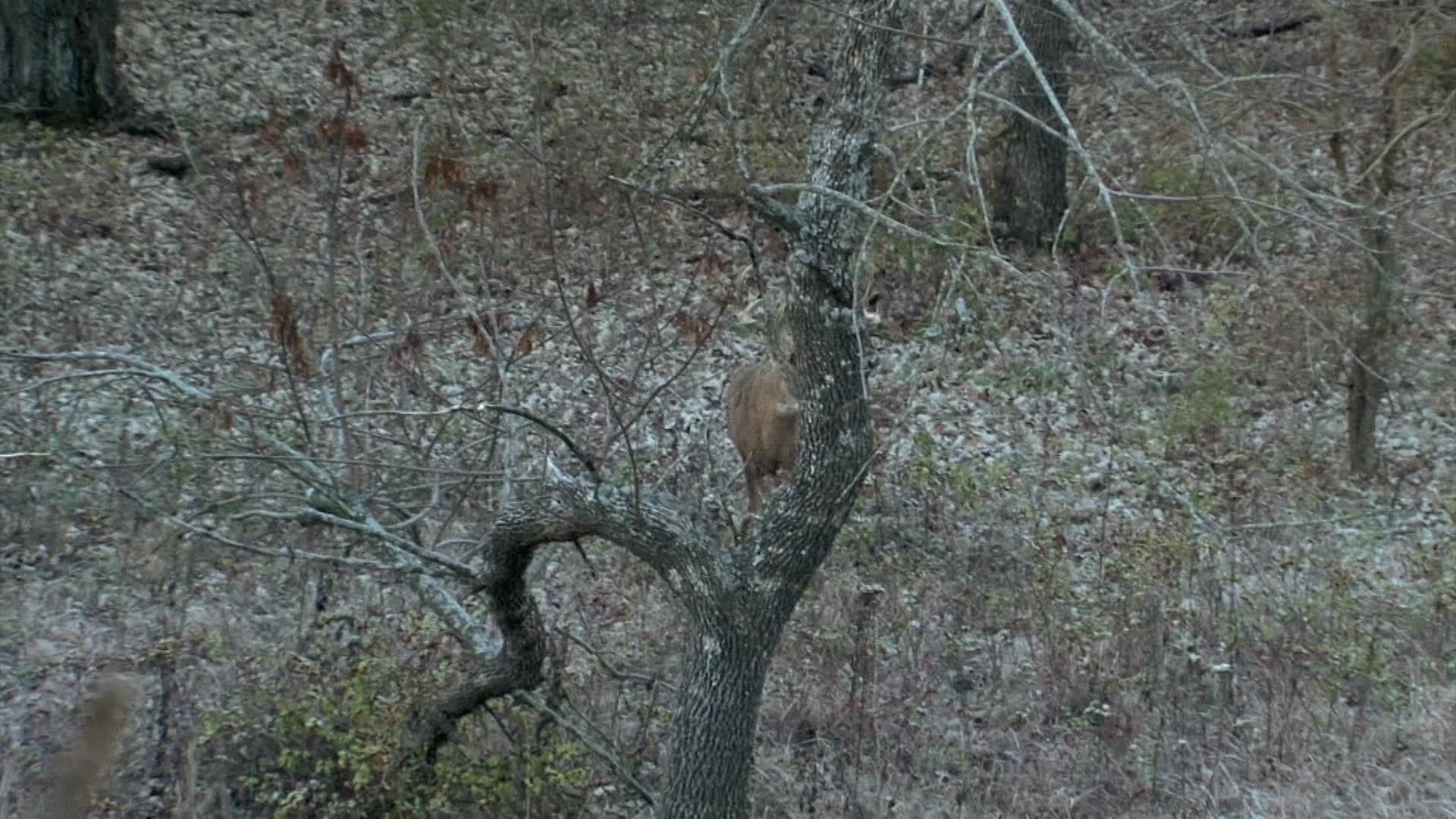 Deer Slam!