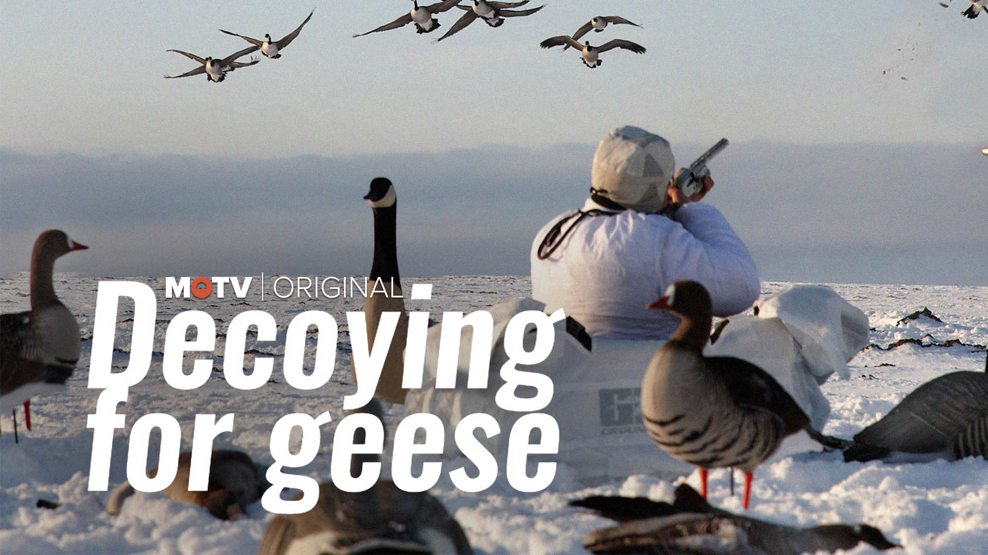 Decoying for Geese