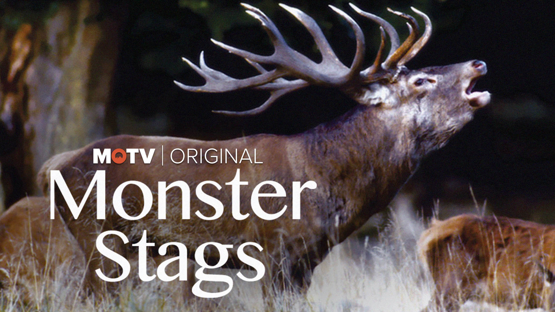 Monster Stags